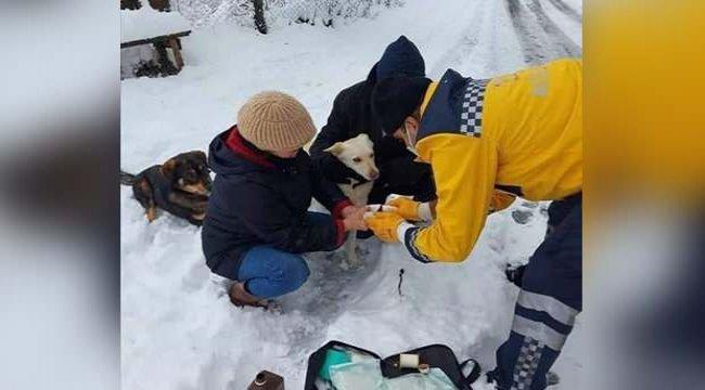 Bakan Koca, yaralı köpeğe müdahale eden paramedik Mustafa Baran'ın fotoğrafını paylaştı
