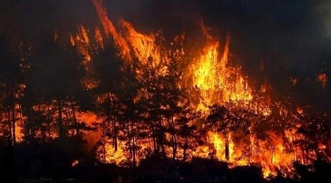 Ormanları yakmanın cezası nedir? Orman yakan kişi ne ceza alır?